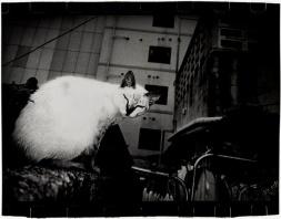 © Anders Petersen