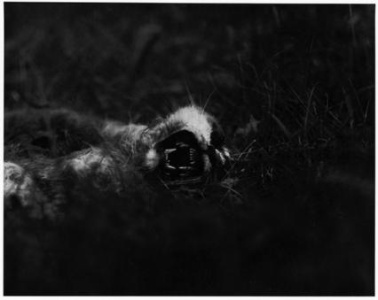 © Ralph Eugène Meatyard