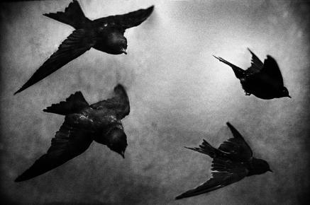 © Yusuf Sevinçli